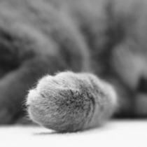 レッドコアラ さんのプロフィール写真