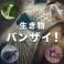 (終了)動物大好き! グループのロゴ
